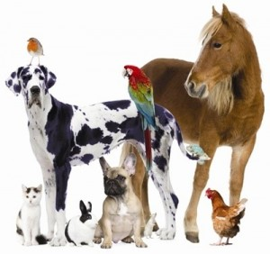 Animal Service