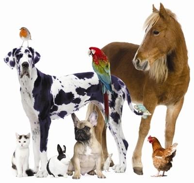 Animal Service 2018