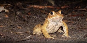Toad Crossing2