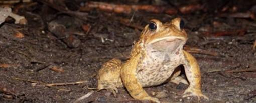 Toad Patrol