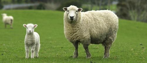 ewes2