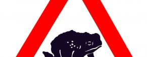 Toads on the Roads