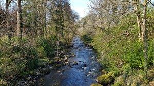 Mountain Stream - R Bartlam