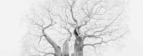 Mark Frith – Tree Portraitist