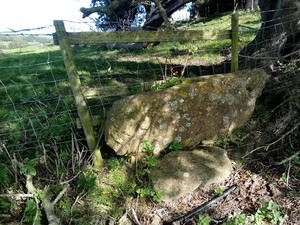 photograph of a stone step stile standing in front of a wire fence with the roots of a tree to its right