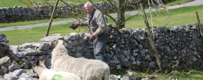 Farmer by Stone Wall