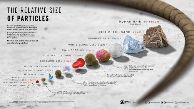 Coronavirus relative size